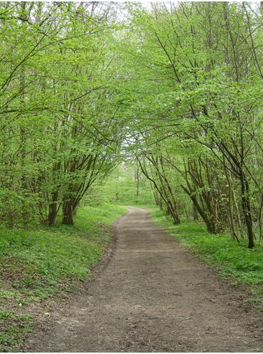 Boi-de-Maroeuil-trek