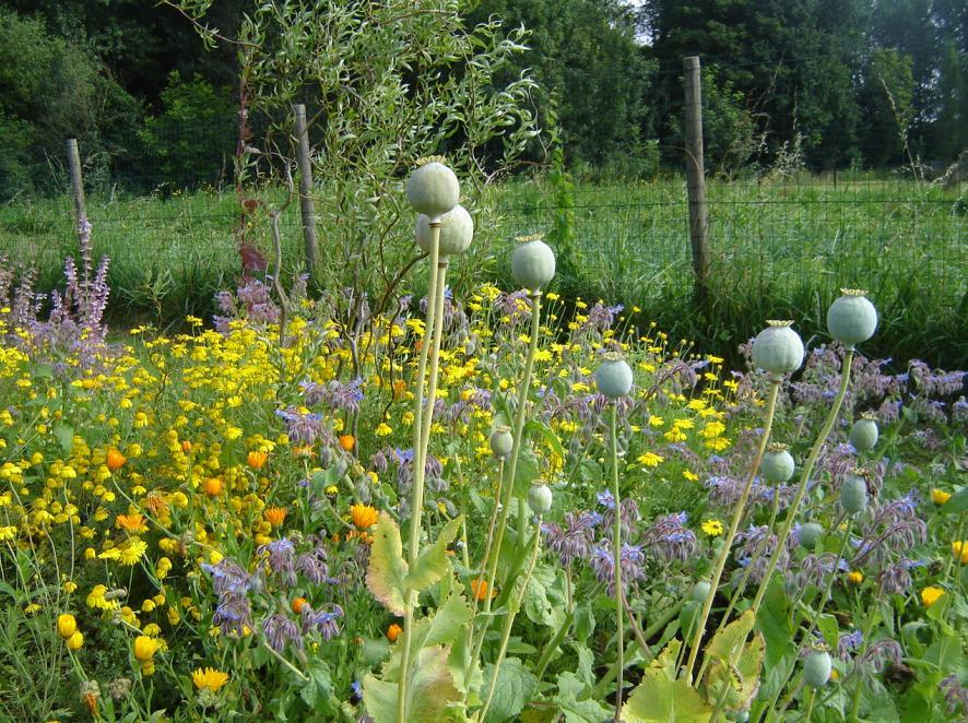 Agny botanical garden, France